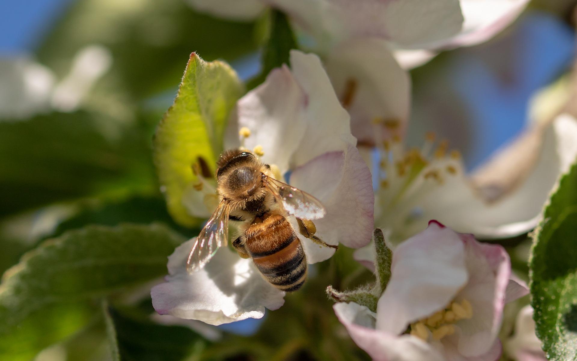 Journée internationale des abeilles