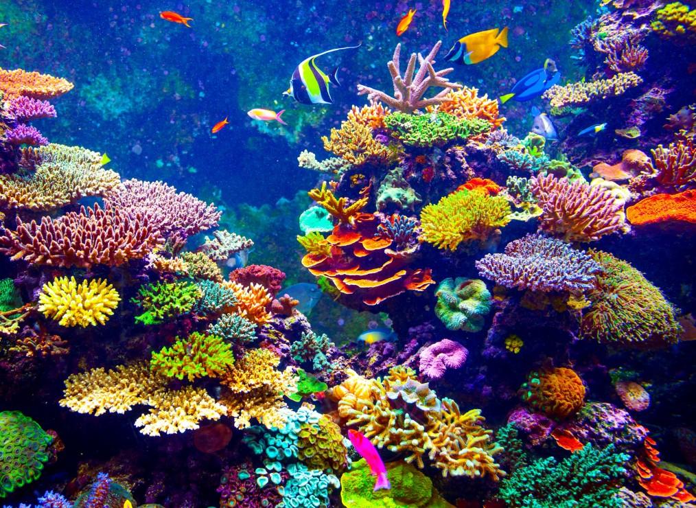 La haute mer, un espace sous pression